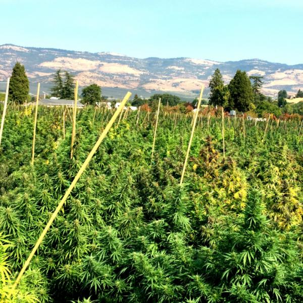 Hemp Oregon