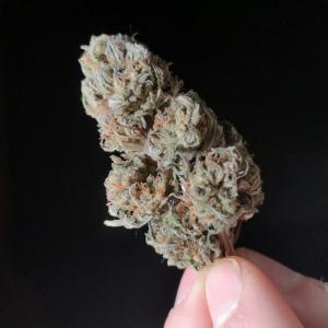 Photo of Sugar Breath by Forestlander