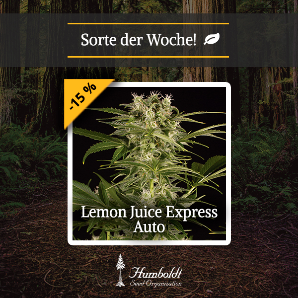 Sorte Der Woche Holt Euch Unsere Lemon Juice Express Auto Mit 15 Rabatt