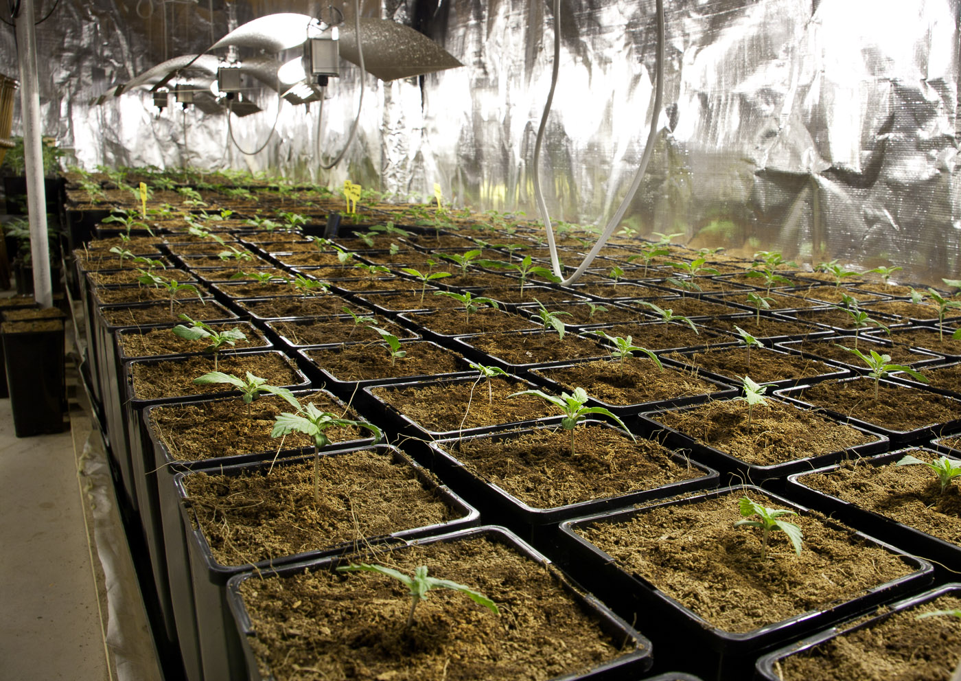 iluminacion cultivo interior cannabis