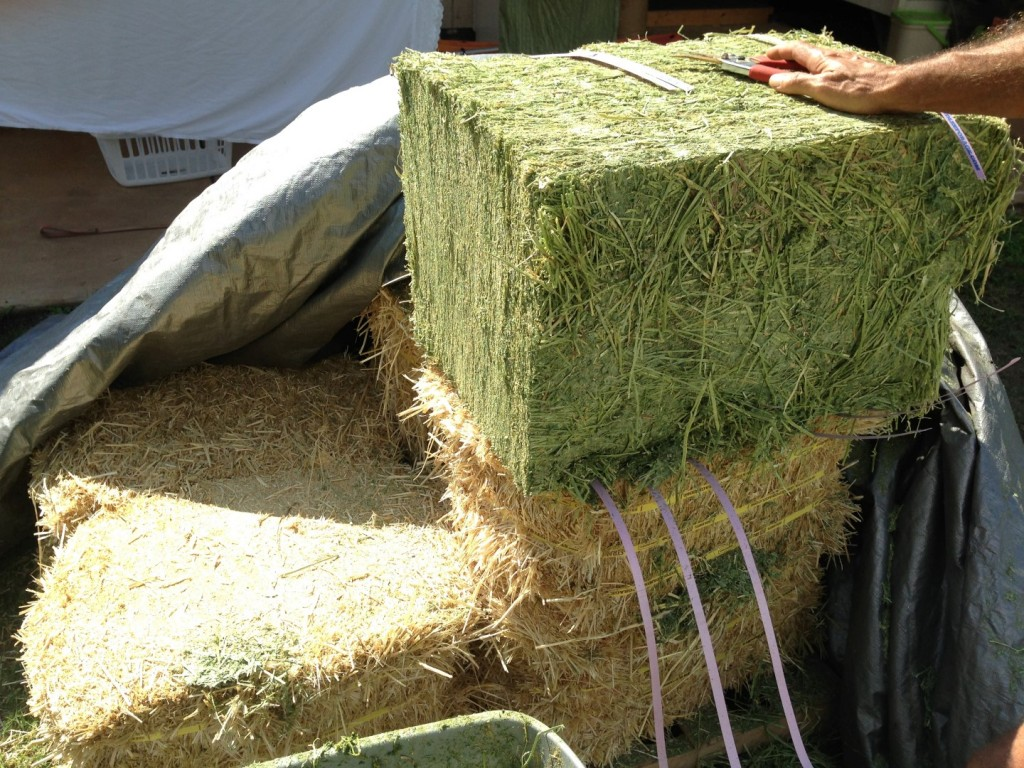 A combination of alfalfa(top)and straw(below) used as layers in the pile. Both breakdown quickly though the alfalfa is more rich in nitrogen.