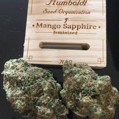 Mango Sapphire by A.Z.
