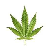cannabis_brand