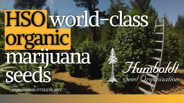 Humboldt Seeds - World-class organic marijuana seeds