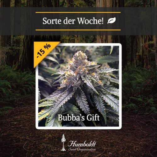 Bubba´s Gift HSO