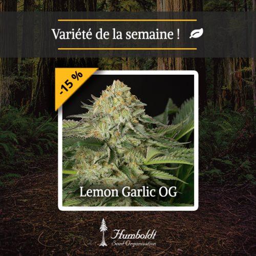 Lemon Garlic OG HSO