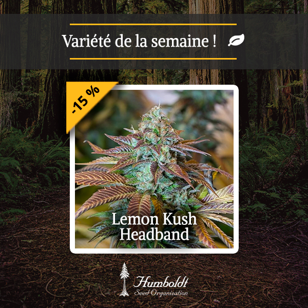 Culture de cannabis interieur cannabis en pot exterieur for Kit culture cannabis interieur