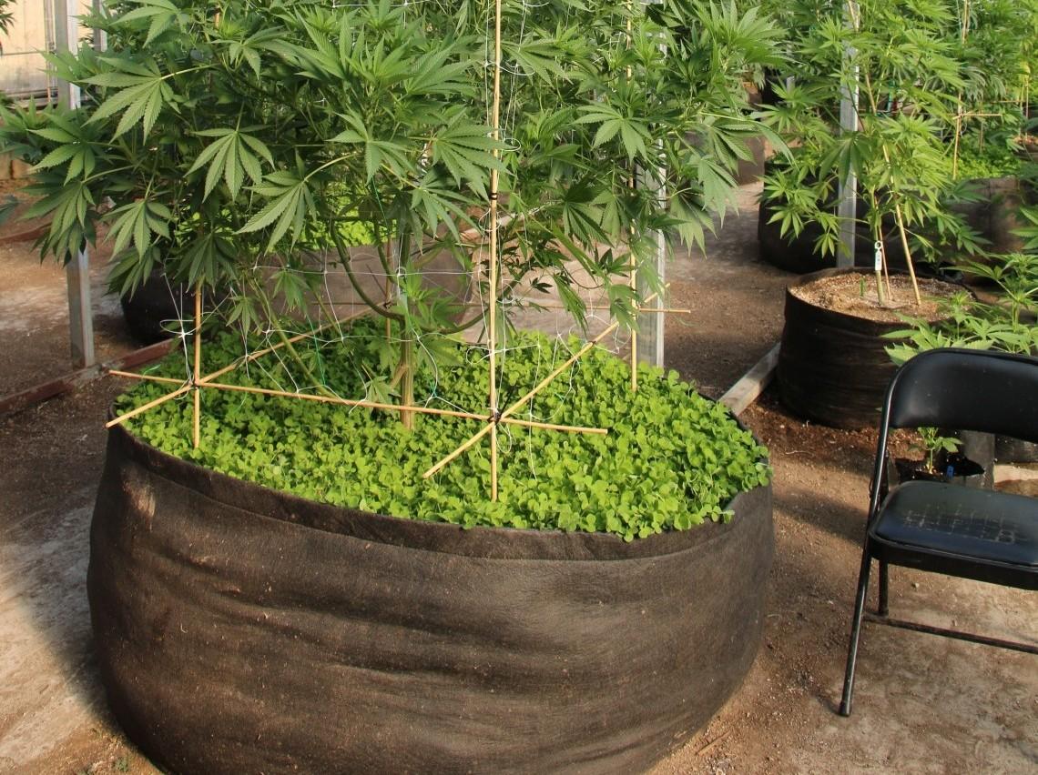 Pot Plastique Grande Taille la culture de cannabis en extérieur : pots en plastique