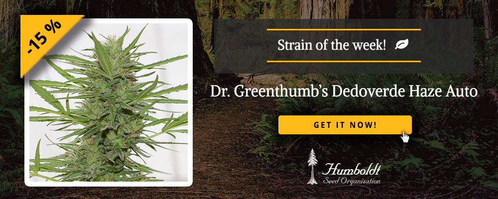 Strain of the week: Dr. Greenthumb's Dedoverde Haze Auto ...