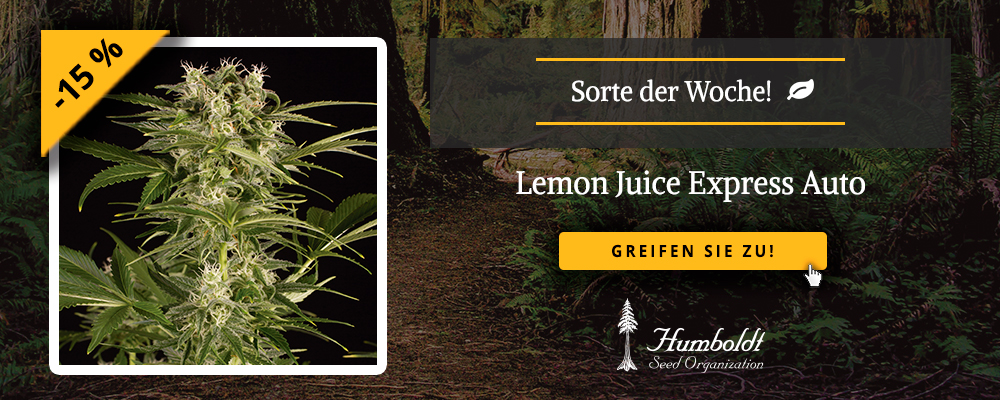 sorte der woche holt euch unsere lemon juice express auto mit 15 rabatt humboldt seeds. Black Bedroom Furniture Sets. Home Design Ideas