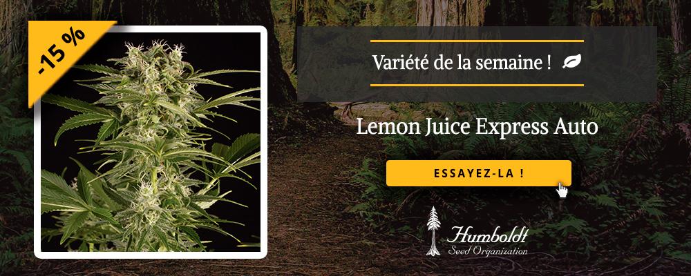 vari t de la semaine procurez vous notre lemon juice express auto et profitez de 15 de remise. Black Bedroom Furniture Sets. Home Design Ideas