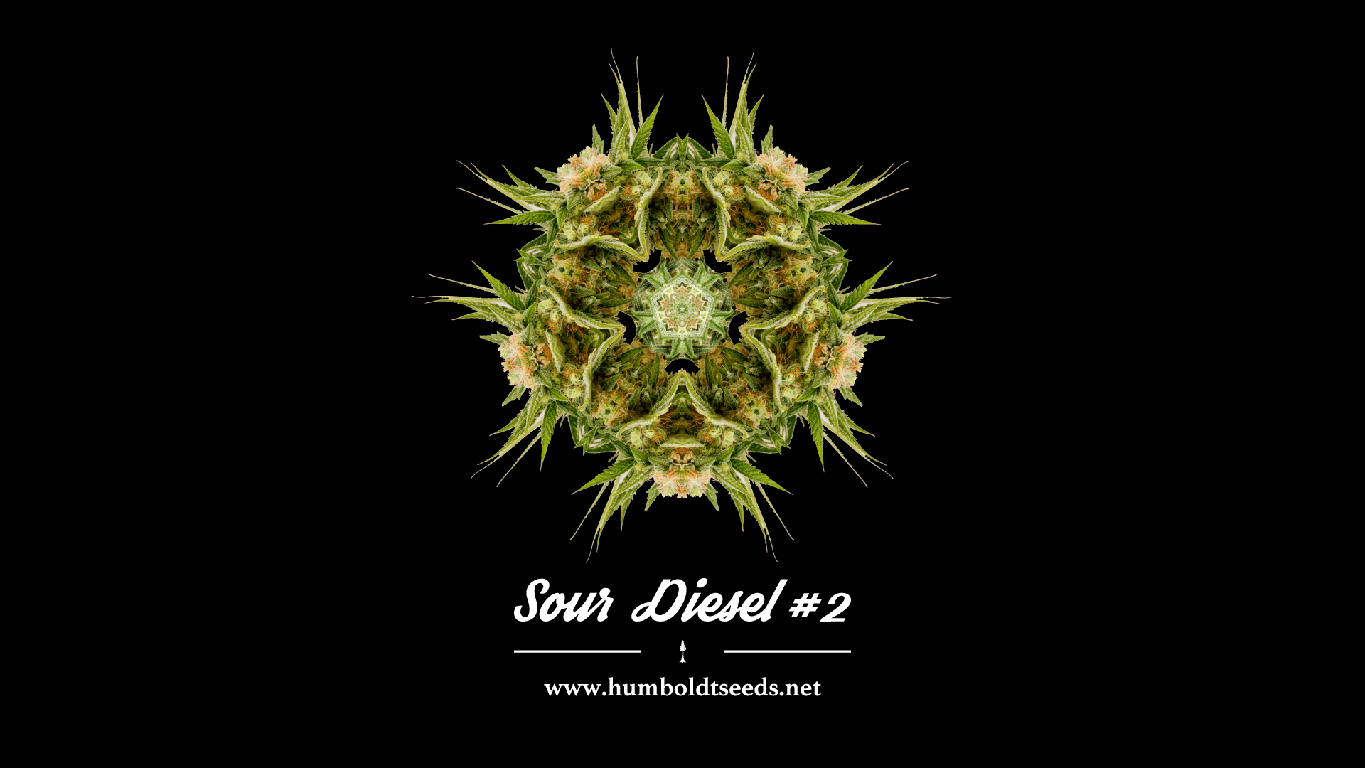 Wallpaper Sour Diesel 2